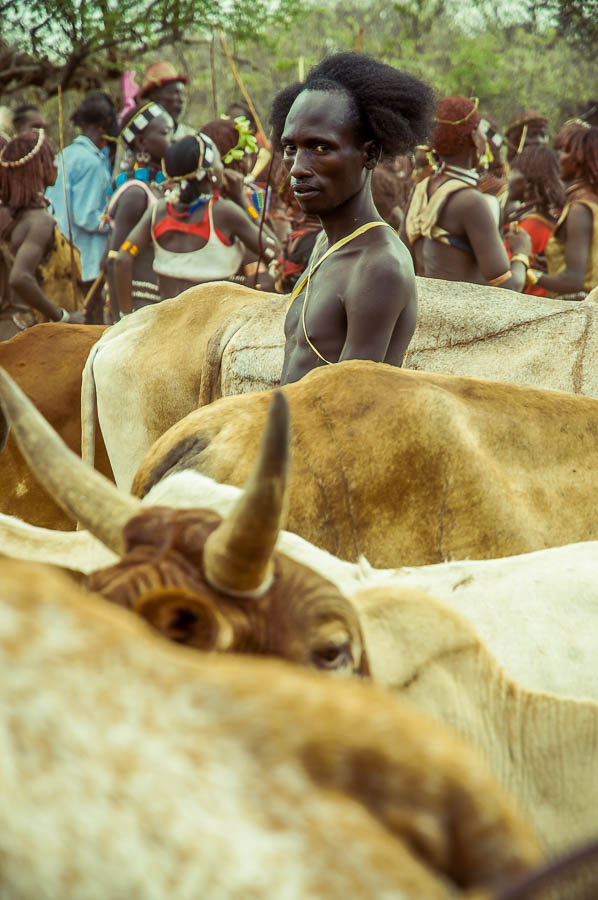 Ceremonia Bull Jumping, Tribu Hamer, Etiopia