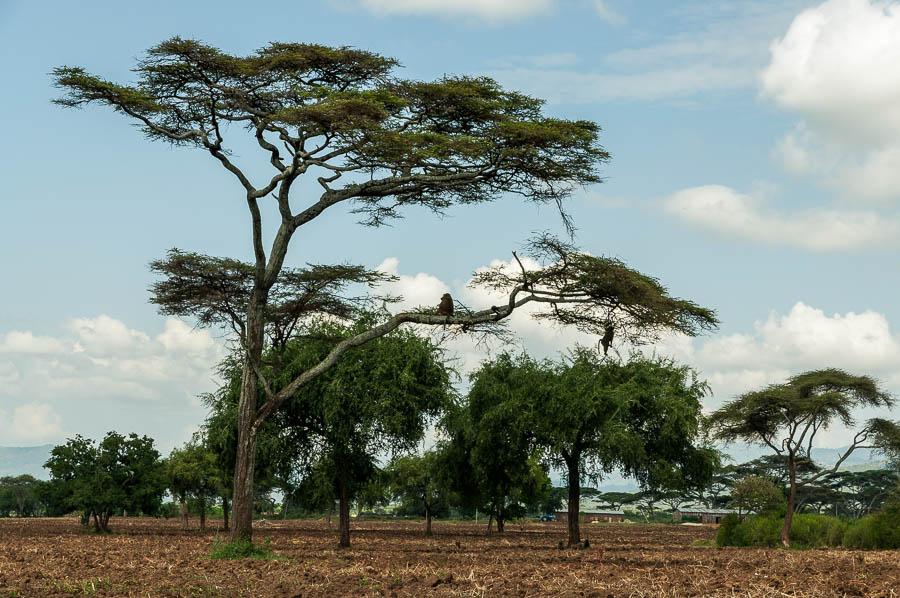 Tribus de Etiopia al sur del país