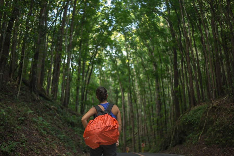 Bosque artificial de Bohol, Filipinas