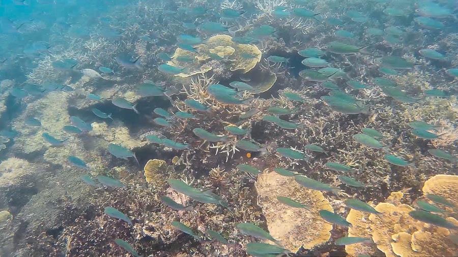 Fondo Marino, Port Barton, Filipinas. Corales, pez payasos etc. Toda una vida debajo del mar