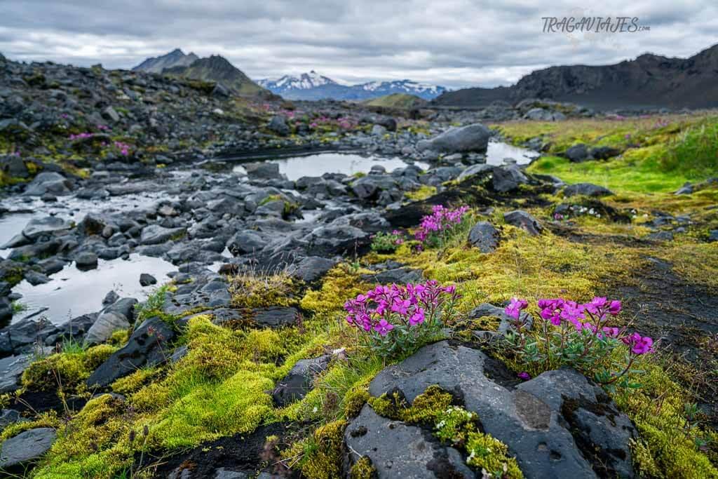Highlands de Islandia - Vegetación de las Highlands