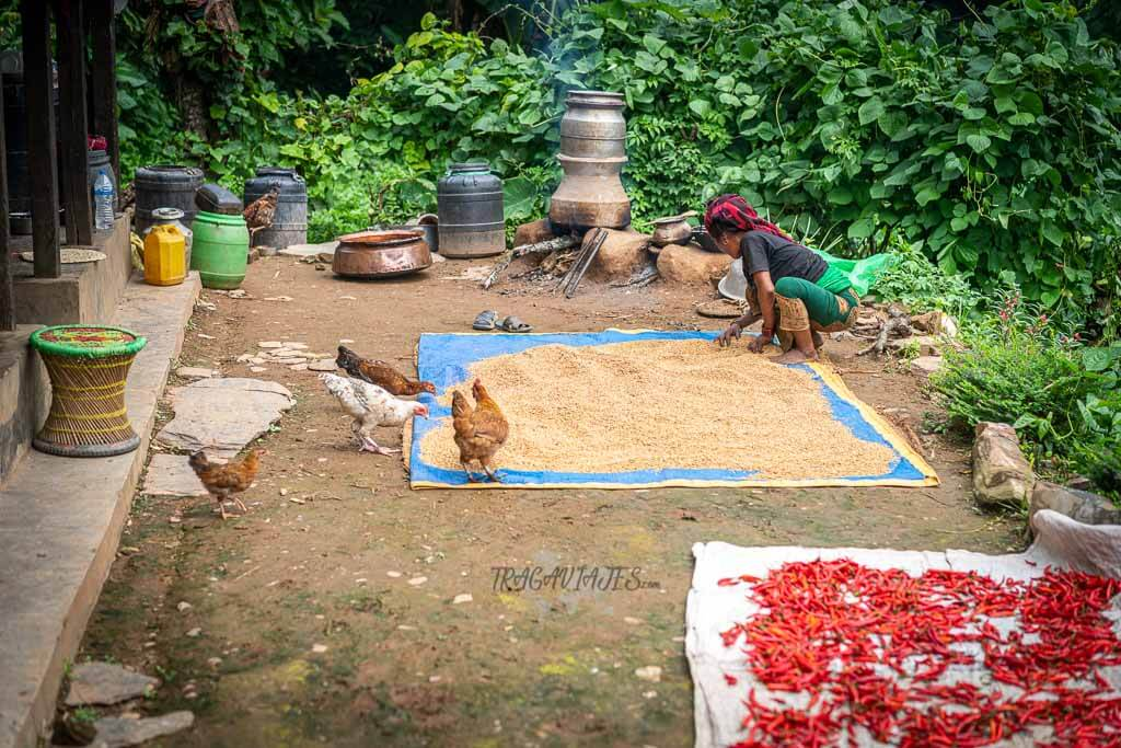 Qué hacer en Bandipur - Ramkot