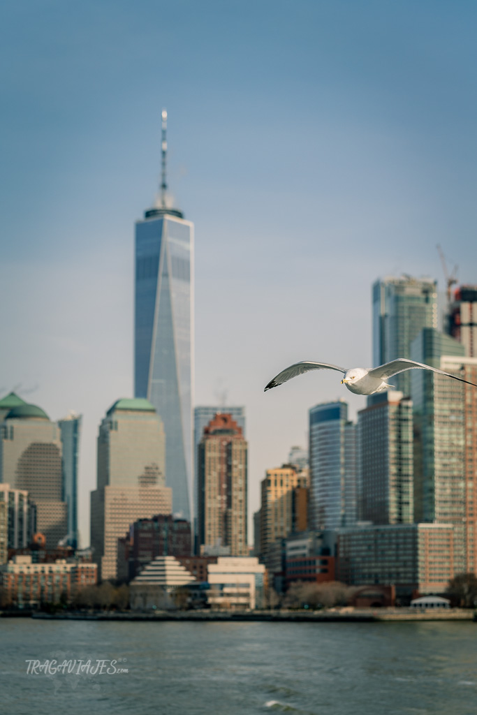 Qué hacer en Nueva York - De camino a Liberty Island