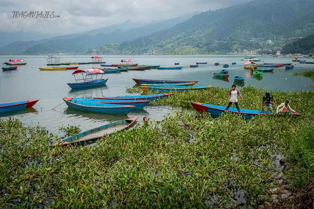 Qué ver en Pokhara - Vida en el lago Phewa