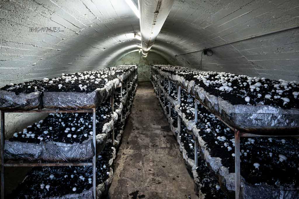 Qué ver en la Rioja en una ruta de 3 días - Fungiturismo
