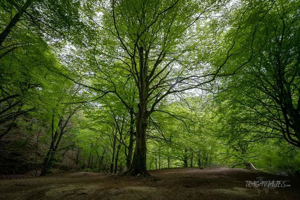 Bosques de Navarra