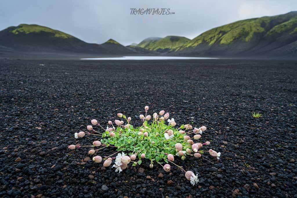 Tierras Altas Islandia ruta 8 días - Paisajes de Langisjór