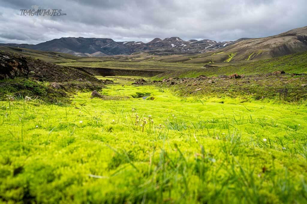 Tierras Altas de Islandia - Musgo fluorescente