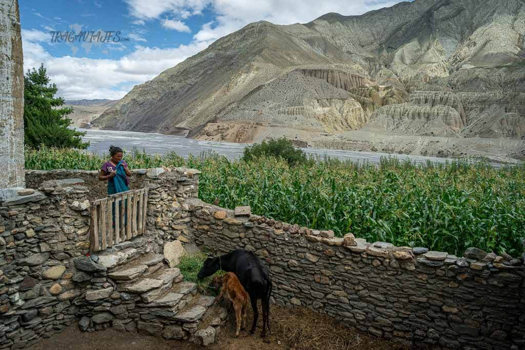 Trekking Lower Mustang - Tiri