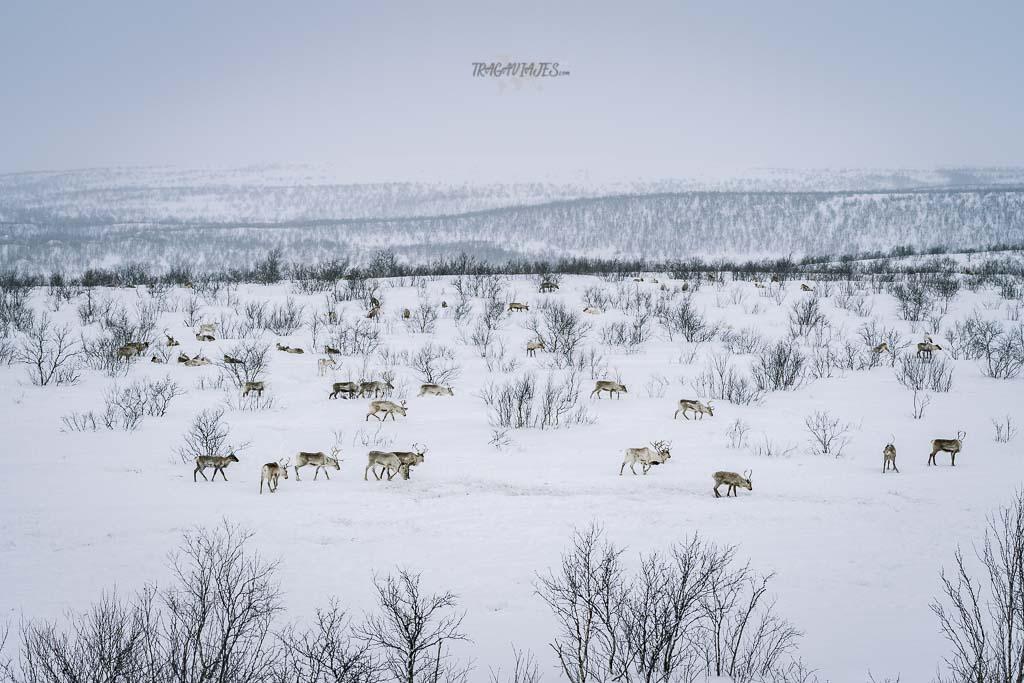 Viaje a Laponia noruega - De camino entre Kautokeino y Karasjok