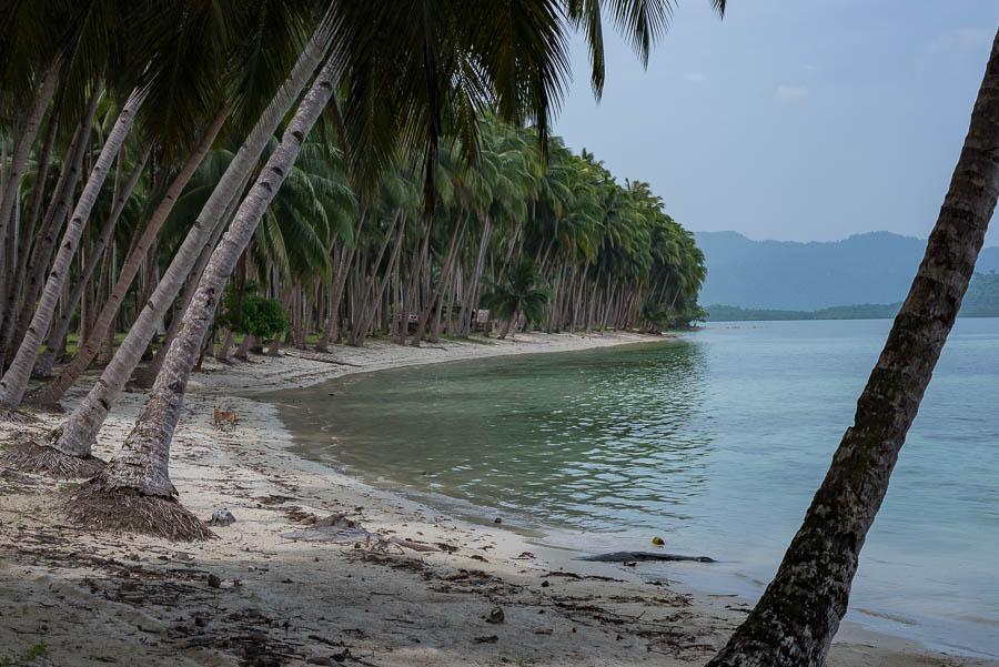 Playa desierta, White beach, Port Barton Filipinas