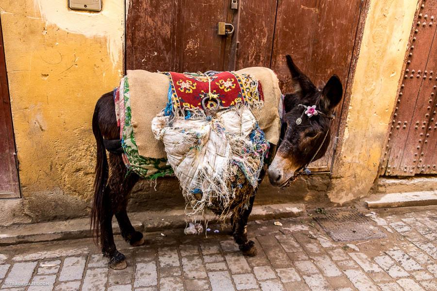 Burro en las calles de la medina de fez, Marruecos