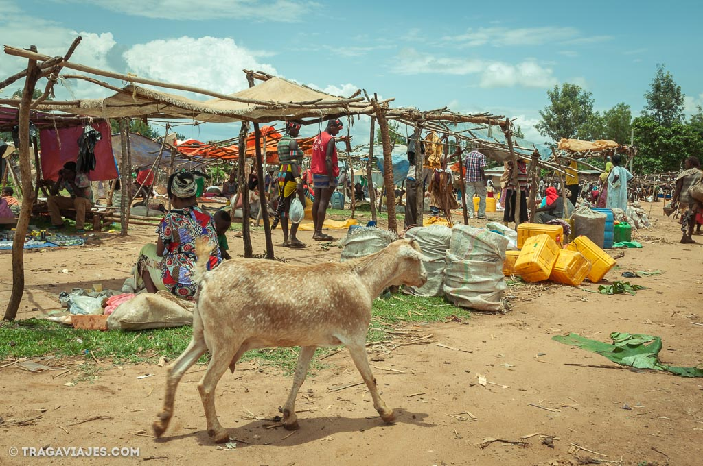 timados en etiopia
