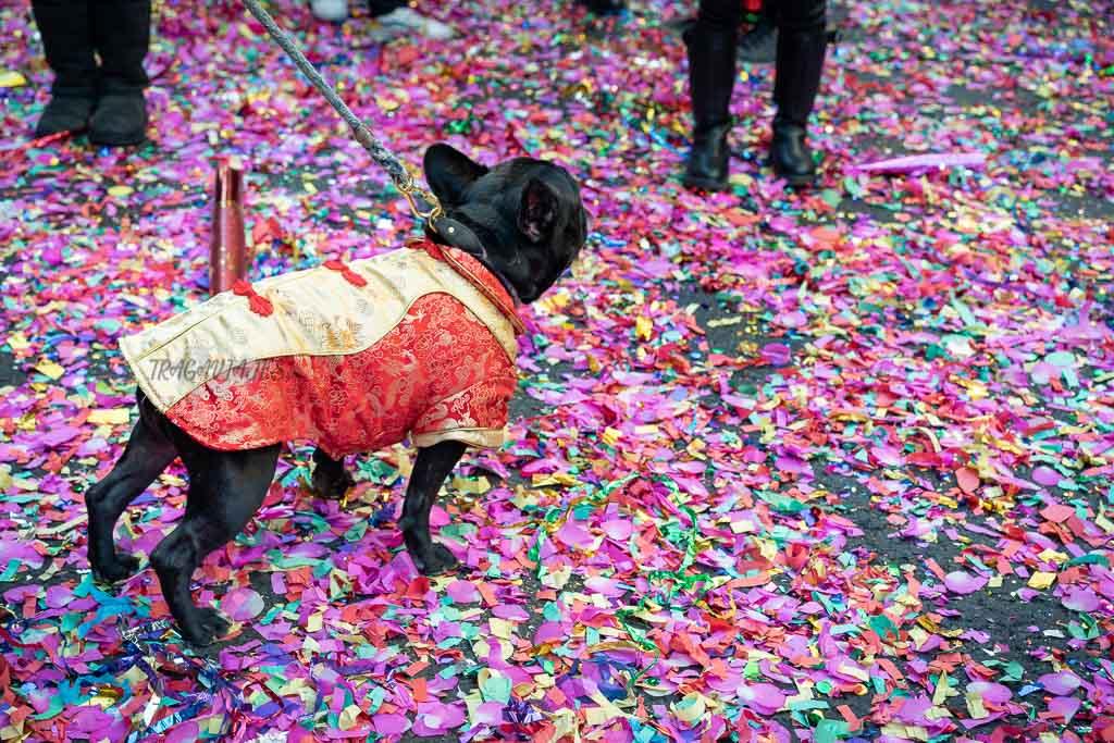 Tour de contrastes de Nueva York - Festividad del Nuevo Año Chino