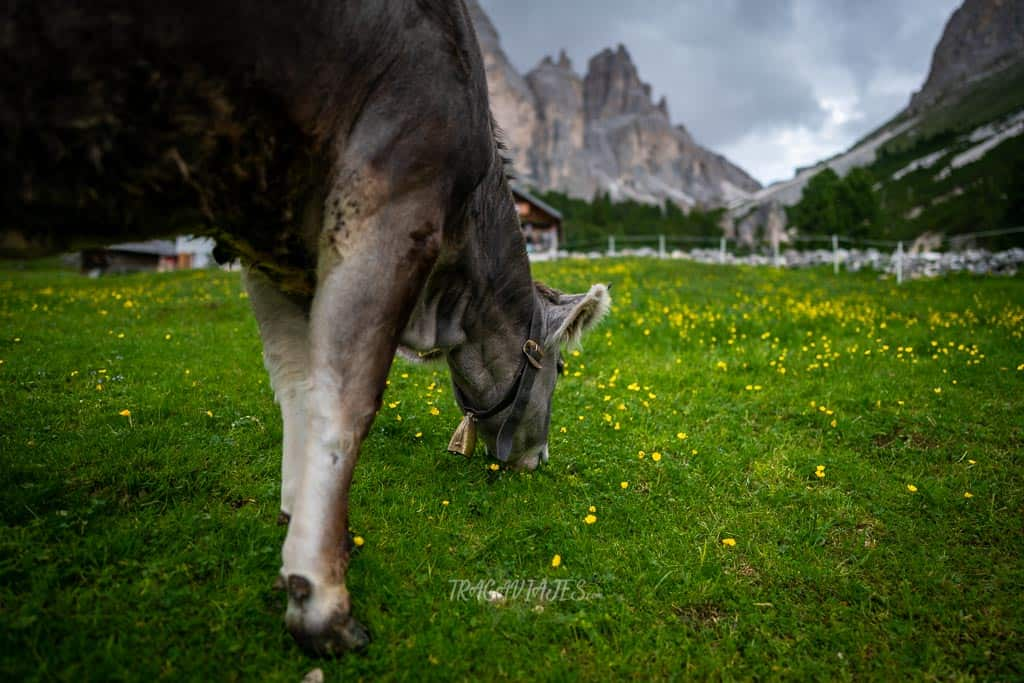 De camino a las Torres de Vajolet en los Dolomitas - Gardeccia