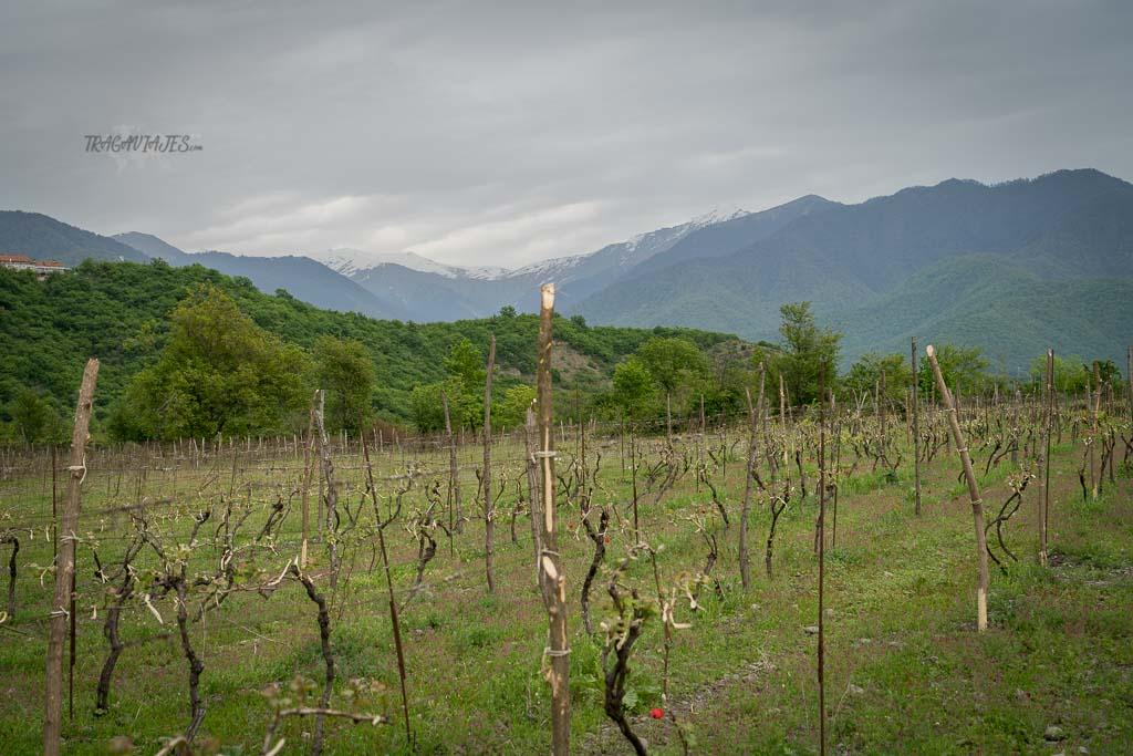 Viaje a Georgia de 10 días - Viñedos de la región de Kakheti