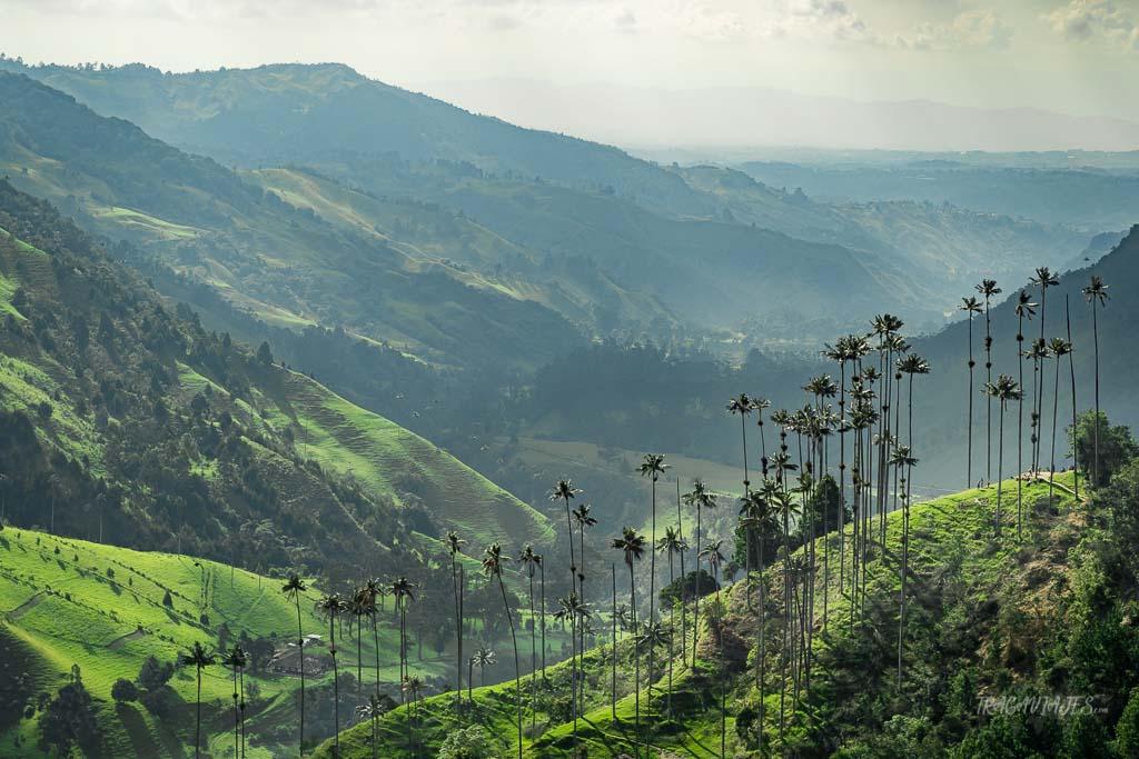 Eje Cafetero colombiano - Valle de Cocora