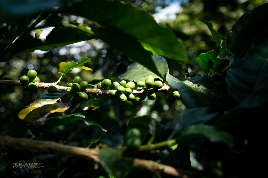 Zona Cafetera de Colombia